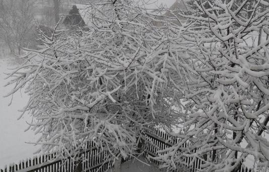 Śnieg Wiosną